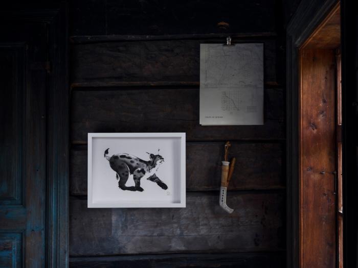 lynx framed wall art print