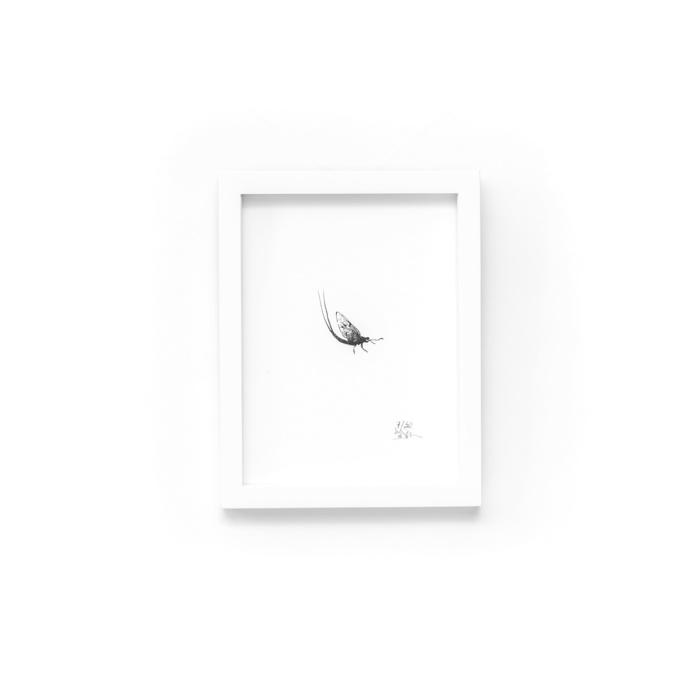 may fly fine art print