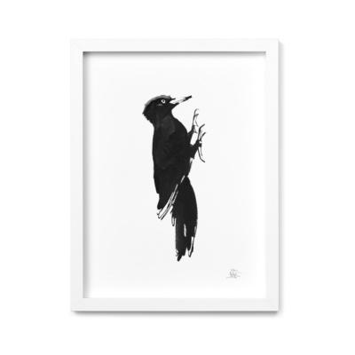 Woodpecker fine art print
