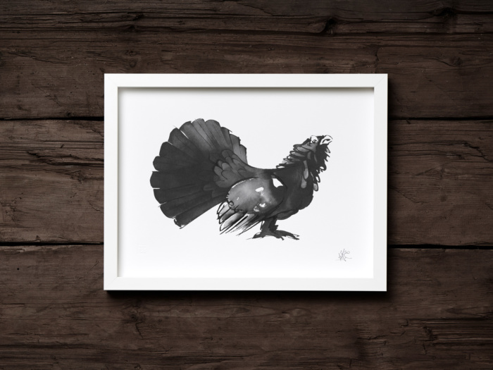 capercaillie framed print