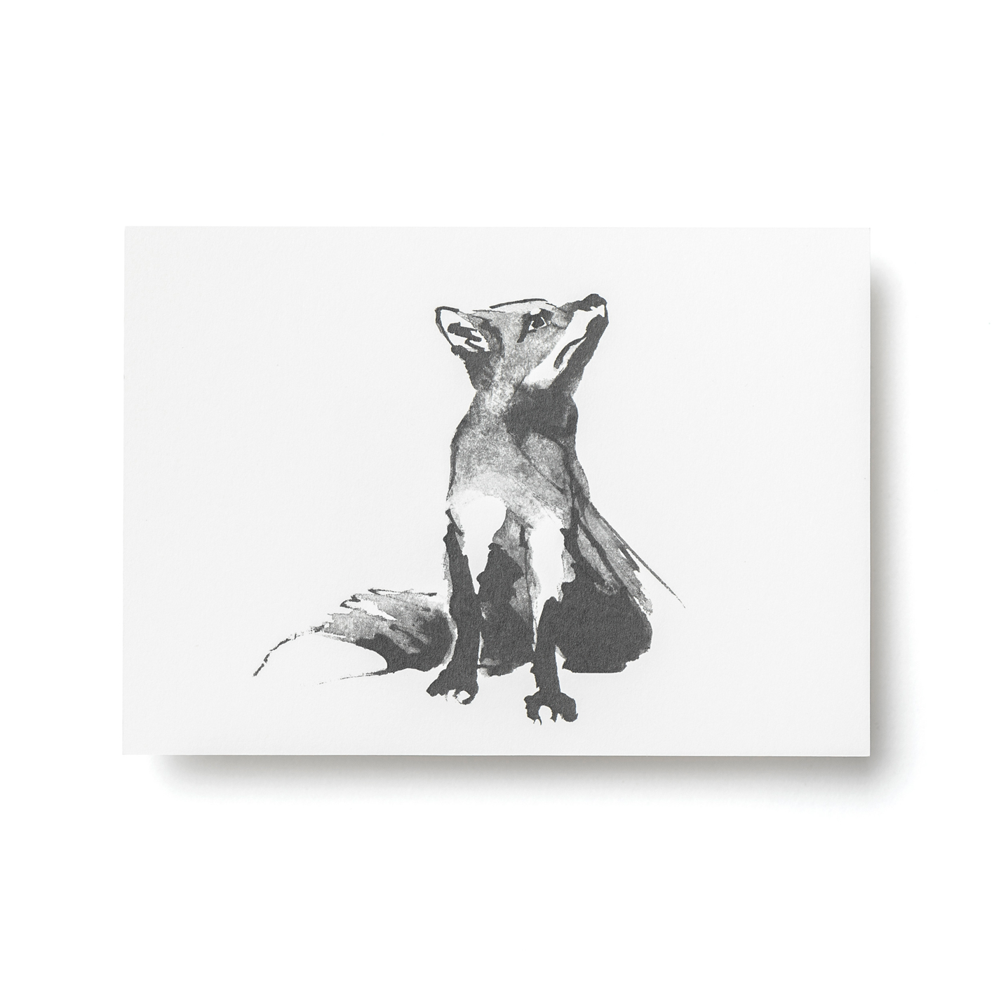 Kettu-postikortti