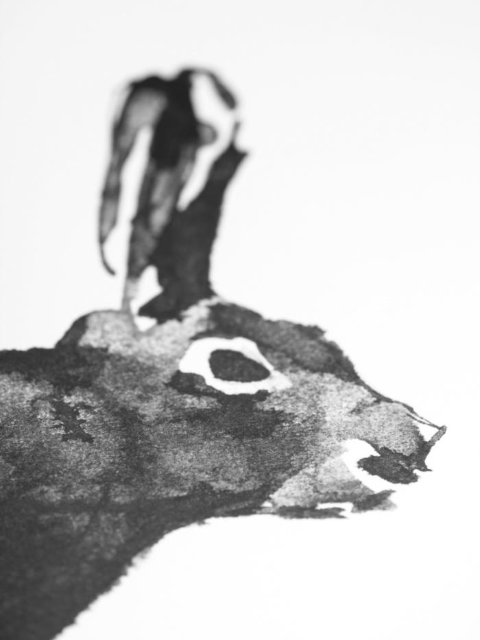 Black & white hare poster