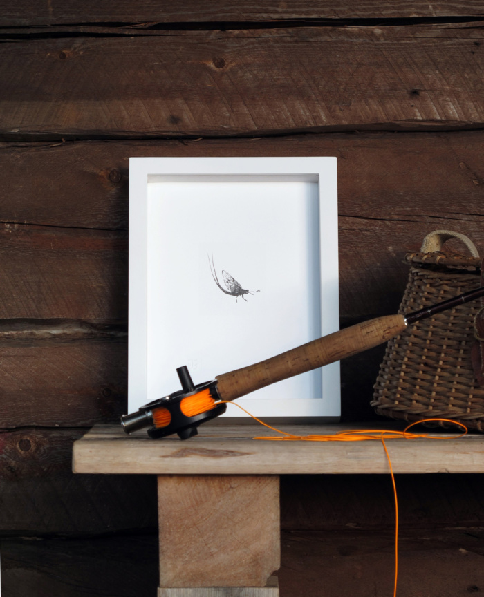 mayfly framed wall art