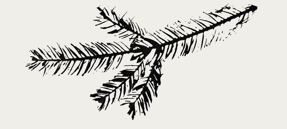 Black & White spruce branch